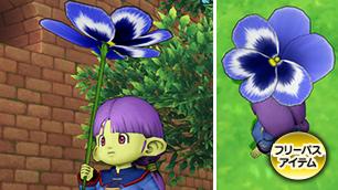青色パンジーの傘
