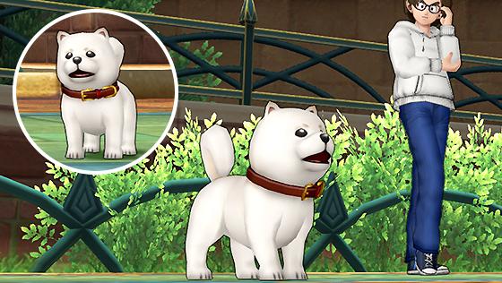 白柴犬カプセル