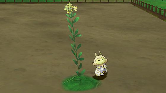 レビュール菜の花 [FP]