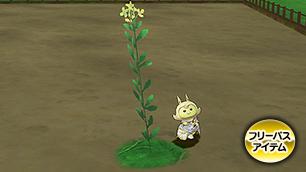 レビュール菜の花【フリーパス】