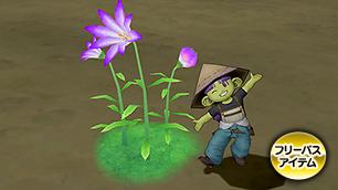 メギストリス紫花[FP]